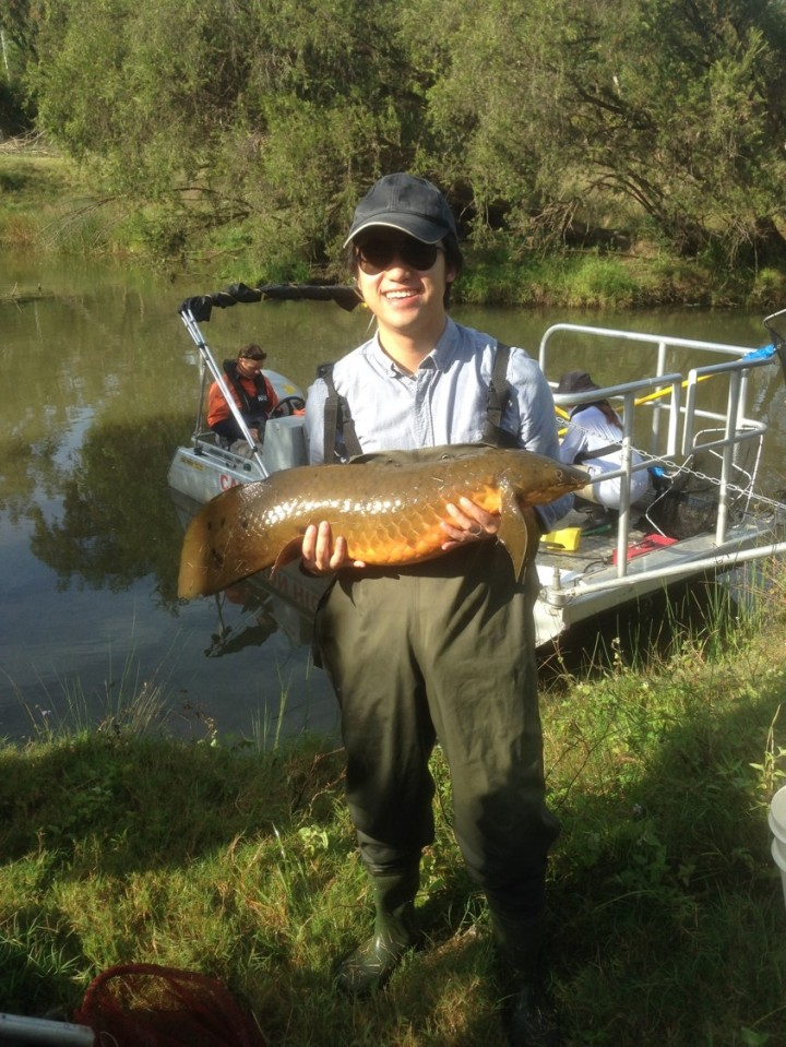 International student helps conservation of iconic AustralianFish