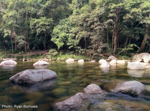 A healthy stream surrounded by rainforest