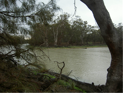 Why science can't determine environmental water requirements for a healthy Murray-Darling Basin