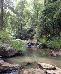 Image of a stream and forest