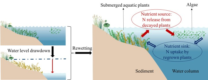 diagram of aquatic plants and nitrogen release