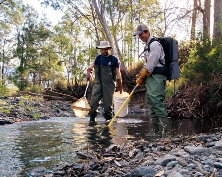 Groundwater sustains plants and animals in intermittentstreams