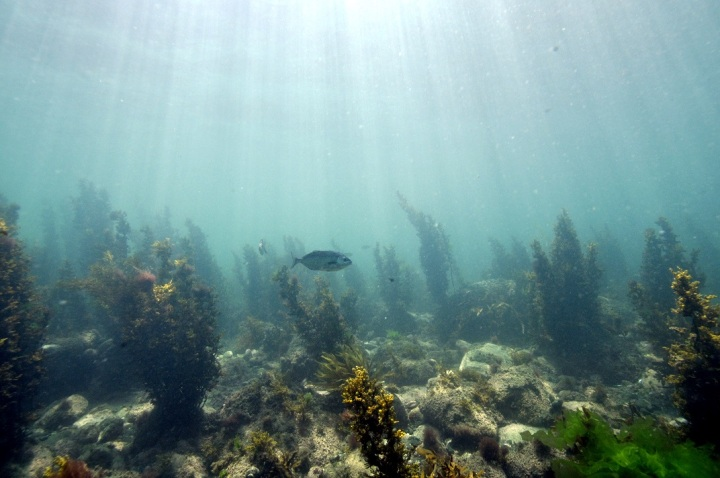 Is New Zealand achieving its ocean conservation targets?