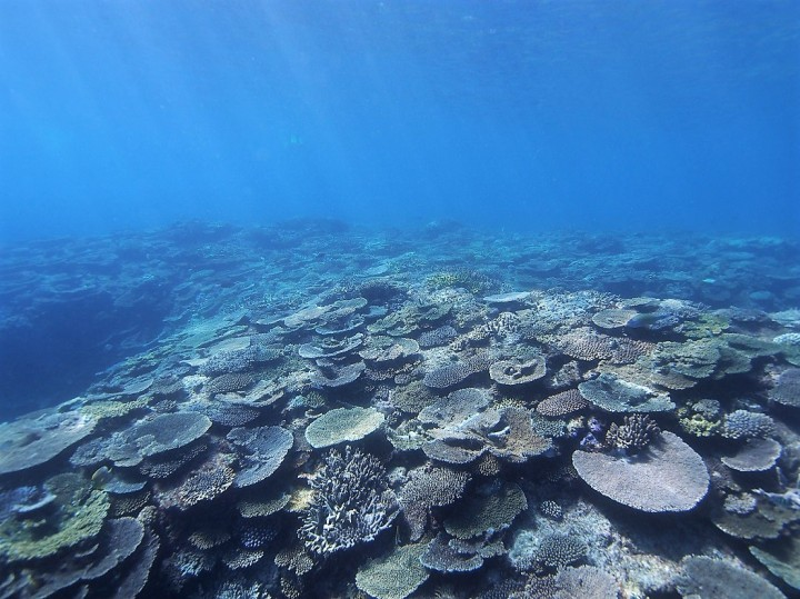 What corals tell us about the impacts of poor water quality