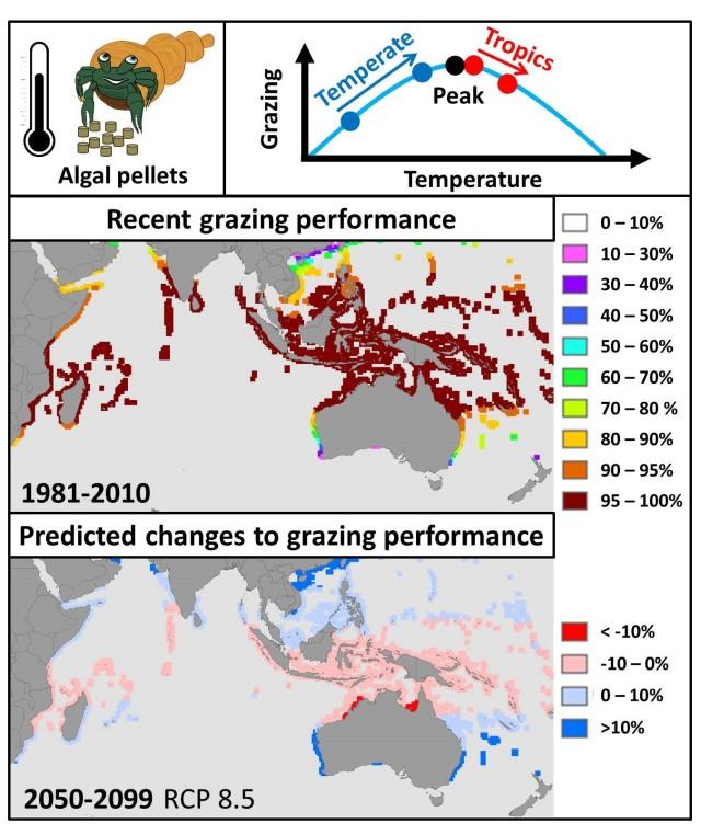 ryan-grazing-article