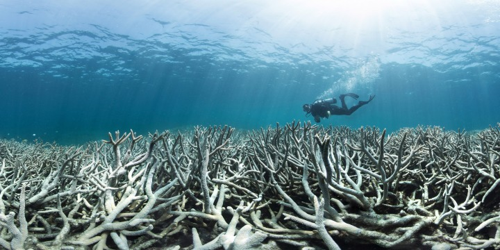 To fix the reef we first need to fix the land – but where do we start?