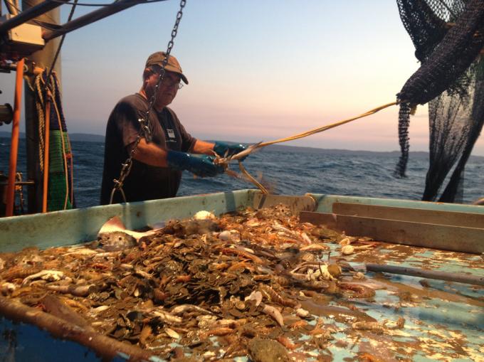Catching prawns