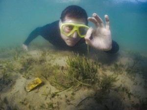 Rod say seagrass is ok