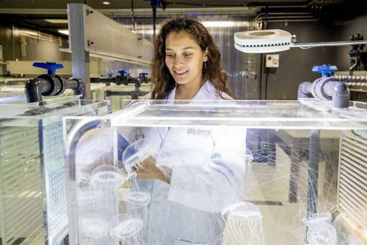 For the love of jellyfish – from Mexico to the Research Labs at Sea World on the Gold Coast