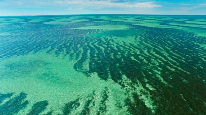 Seagrass habitats lack protection at a globalscale