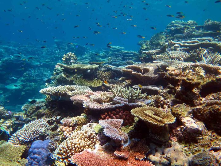 One of the building blocks of the Great Barrier Reef could be in danger