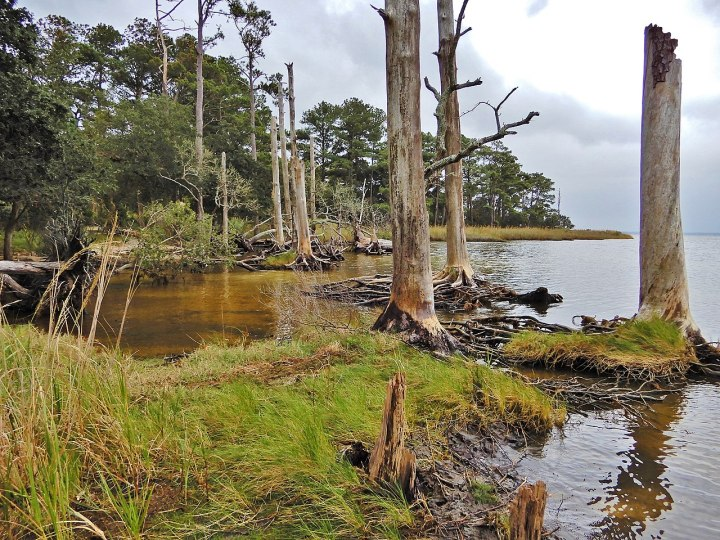 Coastal freshwater wetlands: the forgotten (wet)lands